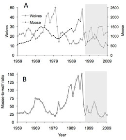The population biology of isle royale wolves and moose an overview in retrospect these changes were likely the result at least in part of inbreeding depression fandeluxe Gallery